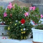 40-grabgestaltung-frankreich-grabbepflanzung